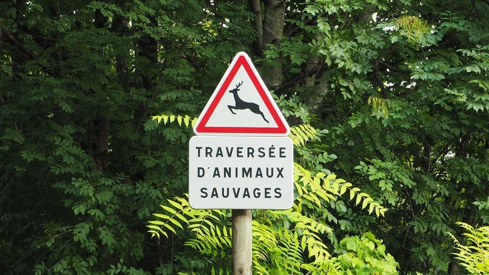 Panneau de danger de traversee d'animaux sauvages